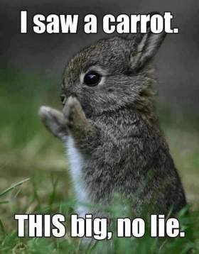 carrotmeme